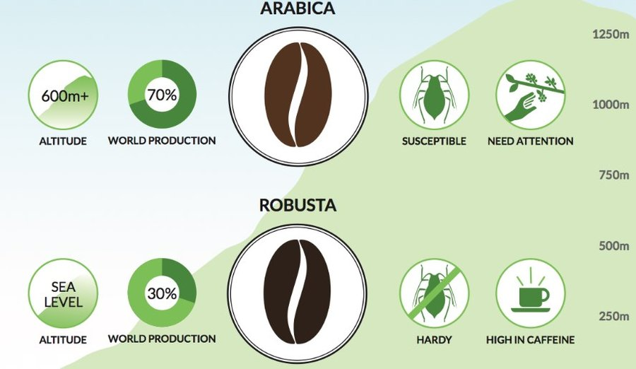 differenza-arabica-robusta
