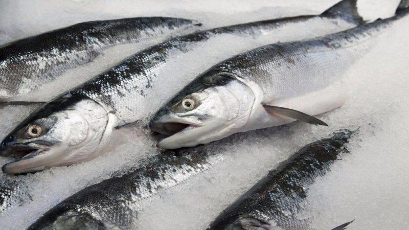 salmone-atlantico