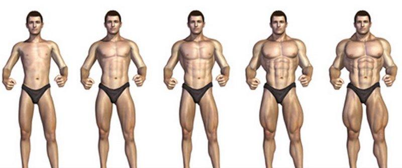la dieta proteica aumenta la massa muscolare
