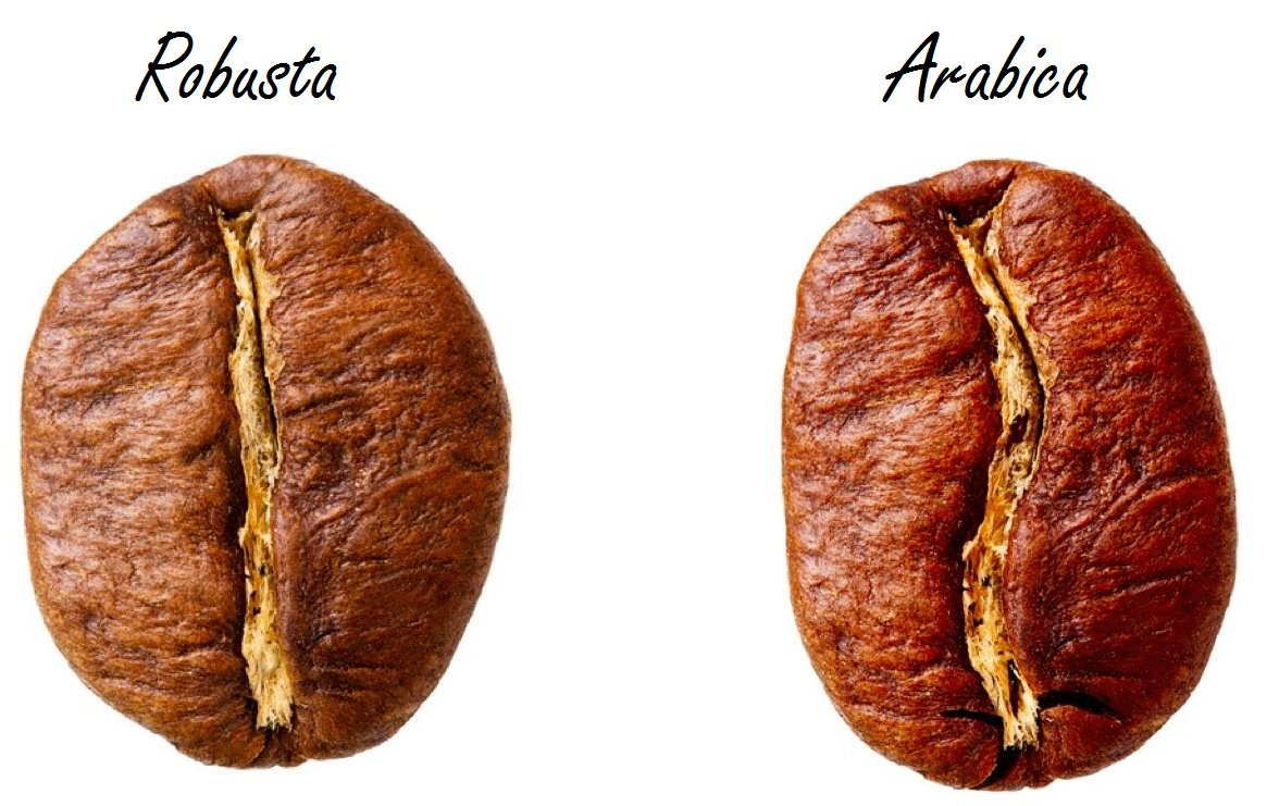 differenze-arabica-robusta-chicco-di-caffe